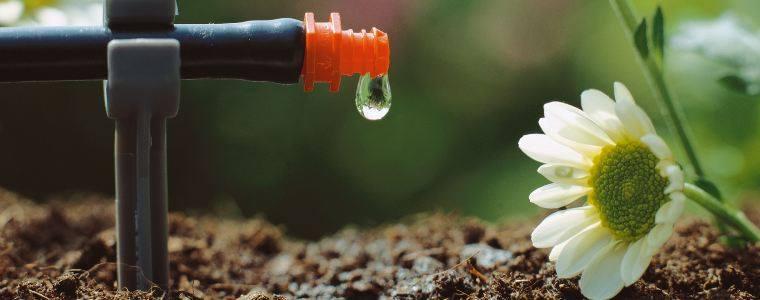 Μάθετε γιατί ποτίζουμε τα φυτά
